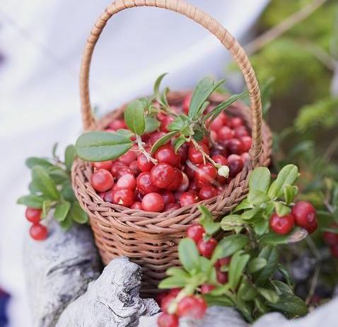 Arándanos rojos y frutos del bosque