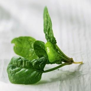 Unas hojas de espinacas