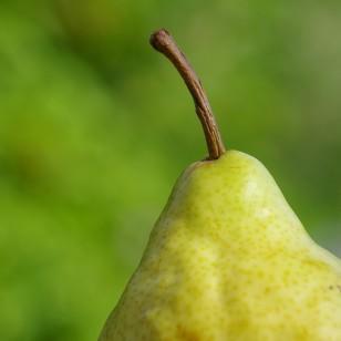 Cuerpo tipo pera