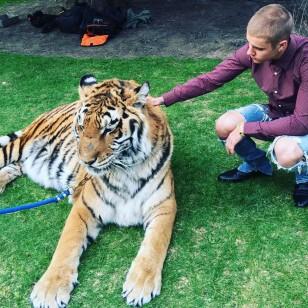 Justin Bieber y su tigre